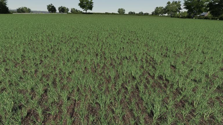 FS19 - Realistic Cereal and Canola Crop Densities V1.0