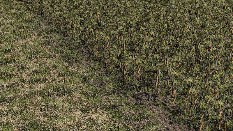 FS19 - Oat, Soybean, Oilseed Radish, Sugar Beet v1.0